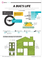 Cicada Infographic Redesign